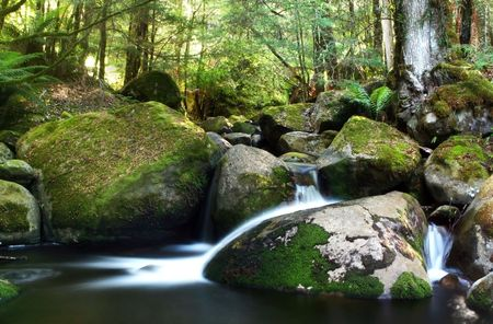 gently: A river flows gently over moss-covered boulders in a temperate rainforest.  Victoria, Australia.