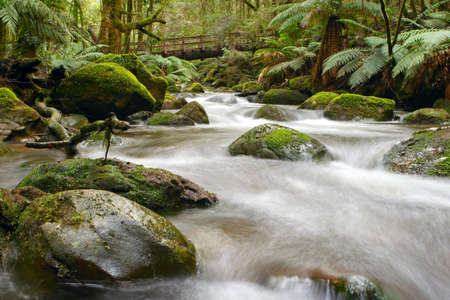 Moss-covered boulders, tree ferns and ancient myrtle beech trees, Yarra Ranges, Victoria, Australia.  Bridge formed from a fallen tree trunk. Stock Photo - 1929264