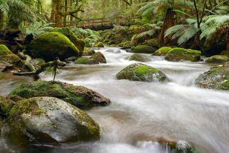 ranges: Muschio-coperto massi, albero felci e antiche mirto faggi, Yarra Ranges, Victoria, Australia. Ponte formata da un tronco d'albero caduto.