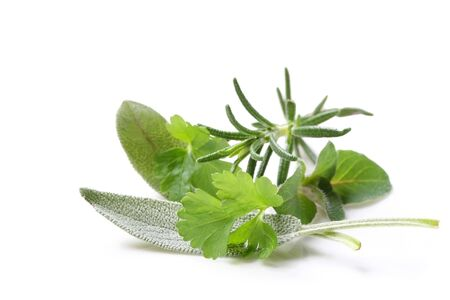 rhyme: Fresh-picked herbs, straight from my herb garden.  Parsley, sage, rosemary and oregano.   Stock Photo