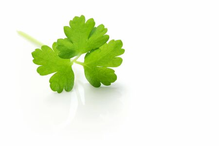 A sprig of fresh Italian parsley, reflected on a white surface.  Macro view. Stock Photo