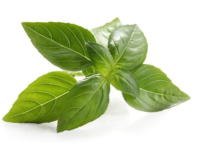 flavouring: Basil sprig, reflected on white surface.  Close-up view of this delicious herb. Stock Photo