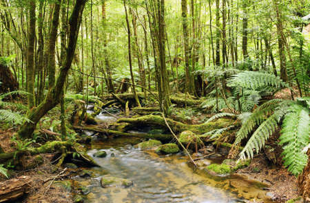 unspoilt: Stream flowing softly through lush rainforest.  Moss-covered boulders, fallen trees and treeferns make for an unspoilt environment.  Yarra Ranges, Victoria, Australia.  XXL file.