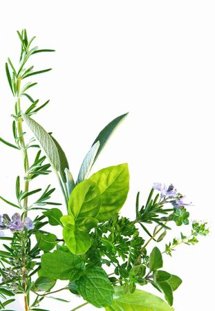 mint leaves: Border of fresh-picked herbs, including rosemary, mint, basil, oregano, thyme and parsley. Stock Photo