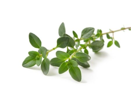 sprig: Fresh-picked thyme sprig, isolated on white.    Stock Photo