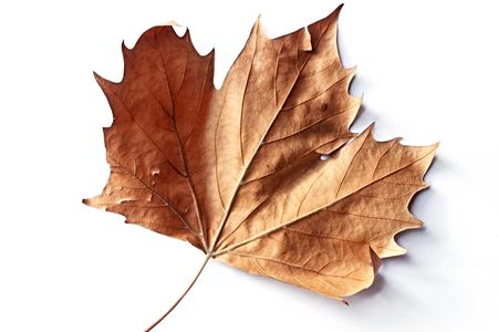 Single autumn leaf, casting shadow on white surface. photo