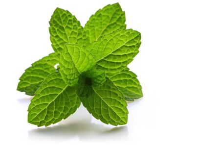 Fresh-picked mint leaves, backlit with natural light, casting soft shadow. photo