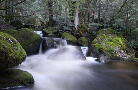 ranges: River cascading over moss-covered boulders, in ancient temperate rainforest.  Yarra Ranges, Victoria, Australia.