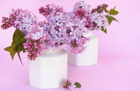 hued: Spring lilacs in white vases. on pastel hued background.
