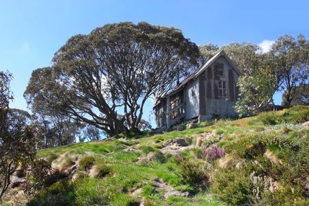 refuge: Cope Hut, Falls Creek, Victorian Alps, Australia.  Old skiers refuge hut, in a spring alpine meadow.