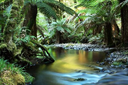 Rainforest river, in golden early morning light.  Yarra Ranges, Victoria, Australia. Stock Photo