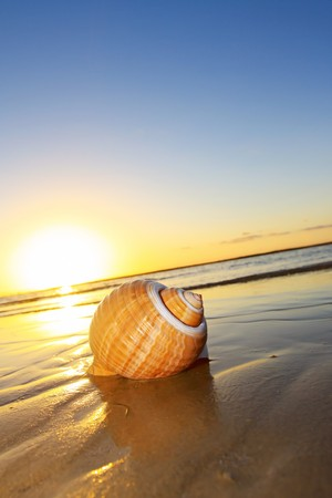 Seashell at the waters edge, with sunset behind. photo