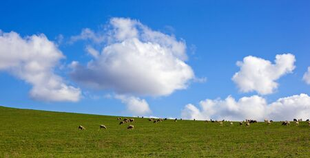 Panorama of sheep grazing on a lush green hillside meadow, with glorious sky behind. Stock Photo - 5366443