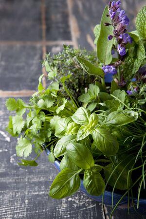 cebollin: Jard�n de hierbas en un recipiente azul, sobre la madera vieja. Incluye cebollino albahaca, romero, salvia en flor, tomillo, menta, romero, or�gano y cilantro o culantro.