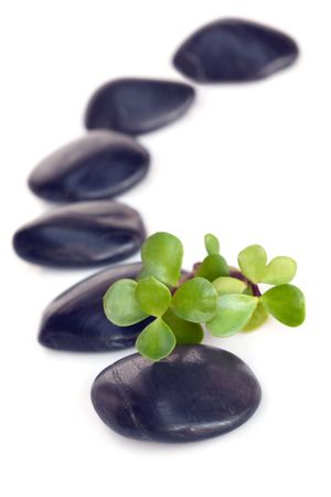 Spa treatment massage stones, with jade leaves.  Focus on jade. Stock Photo
