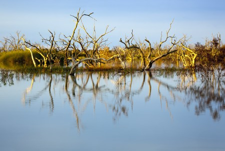 australian scenic: Submerged trees in a lake, at sunset.  Lake Menindee, outback New South Wales, Australia.