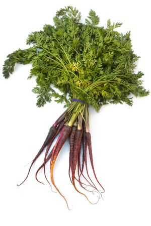 marchew: Bunch of heirloom purple carrots, over white background.  High in antioxidants.