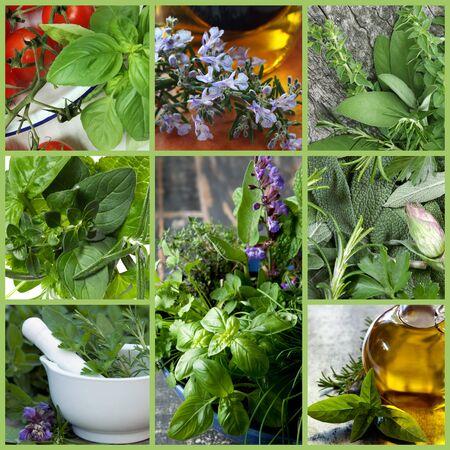tomillo: Collage de imágenes de hierba fresca. Incluye la albahaca, el perejil, el orégano, el tomillo, la salvia y el romero.