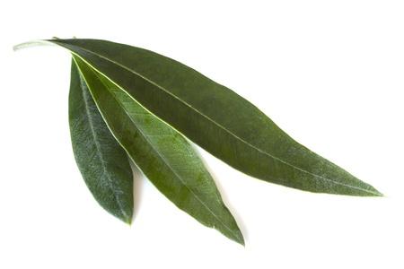 three leaf: Fresh olive leaves, isolated on white background. Stock Photo