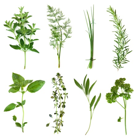 Herbs collection, isolated on white.  Includes oregano, dill, chives, rosemary, basil, thyme, sage and curly parsley. photo