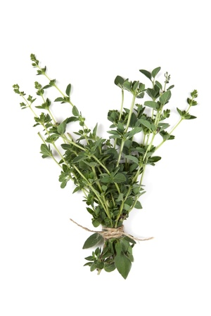 Bunch of fresh oregano, tied with string, over white background.