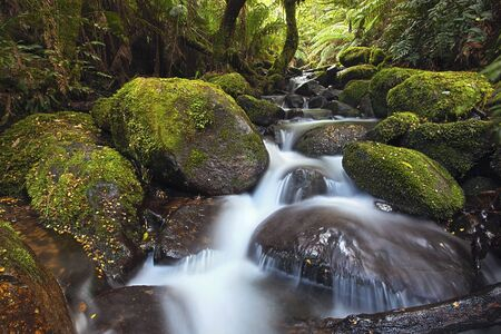 Rainforest cascade, Yarra Ranges National Park, Australia. photo