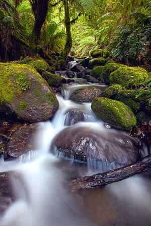 ranges: Rainforest cascade, Yarra Ranges National Park, Australia.