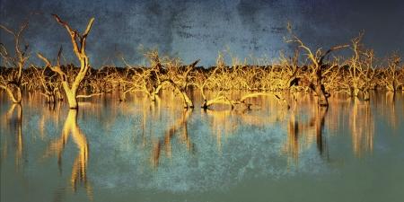 arboles secos: Inundado árboles muertos en un lago al atardecer, con efectos del grunge. Menindee, Nueva Gales del Sur, Australia.