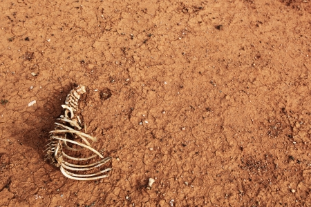 A skeleton lies on cracked red desert earth.  Global warming concept. photo