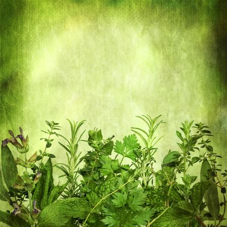 tomillo: Herbal, con efectos del grunge. Un montón de espacio de la copia. Incluye salvia, menta, hierbabuena, romero, cilantro, perejil, orégano y tomillo. Foto de archivo