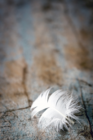 white feather: White feather on old timber background.  Great grunge textues.