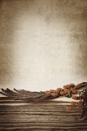 wattle: Pressed dried flowers in an antique book.  Lots of copy space.  Remembrance or genealogy vintage background.
