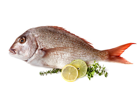 Whole raw fish garnished with lemon, lime and herbs, isolated on white.  Delicious pink snapper.