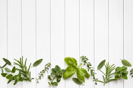 herbs: Hierbas frescas frontera más de blanco panel de madera de fondo. Foto de archivo