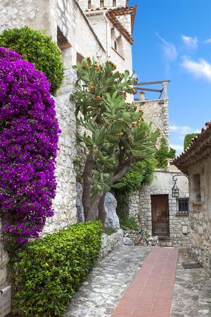 bougainvillea flowers: Winding narrow stone streets in Eze near Nice, France.  Beautiful bougainvillea.
