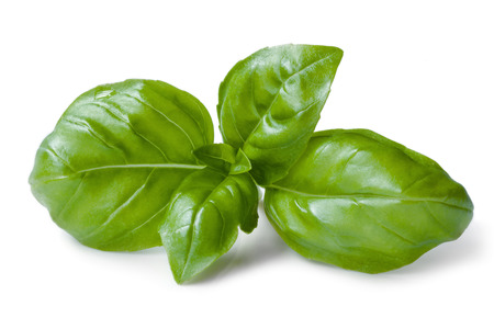 white background: Basil isolated on white background. Stock Photo