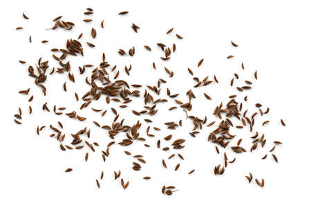 Caraway seeds isolated on white background, top view. Stockfoto