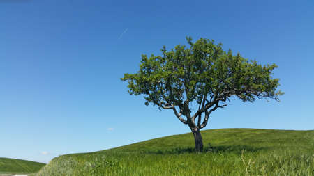 rural scenes: Tree and rural scenes Stock Photo