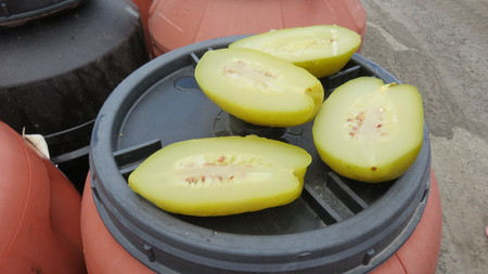 cedars: Processing Pickled cedars