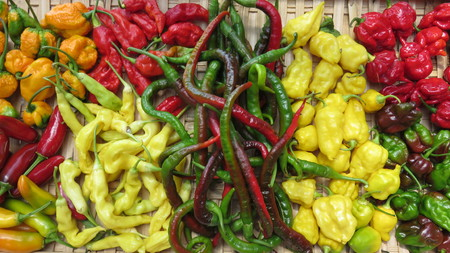 variety of chillies