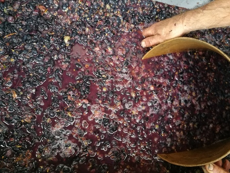 production of wine home