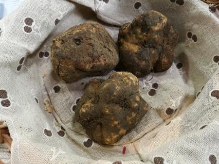 truffe blanche: truffe blanche
