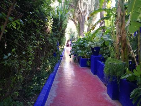 majorelle garden Stock Photo