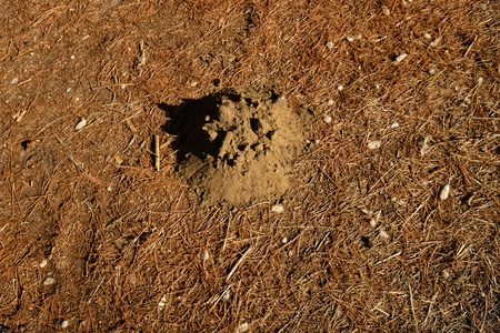 moles earth mound