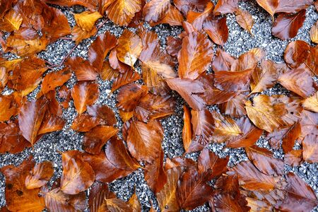 background of dry leaves bathed in rain
