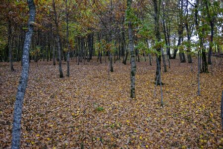 undergrowth of leaves in the autumn forest