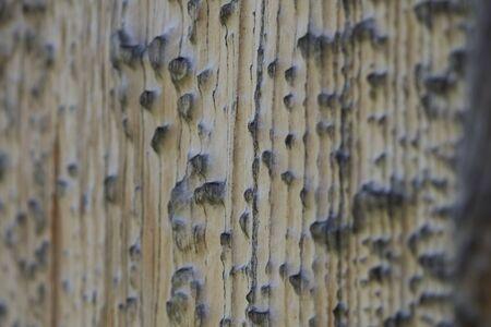 High resolution wooden texture wooden grey brown black white lines branch