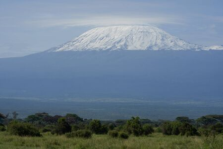 Amboseli - Big Five Safari -Kilimanjaro African bush elephant Loxodonta africana