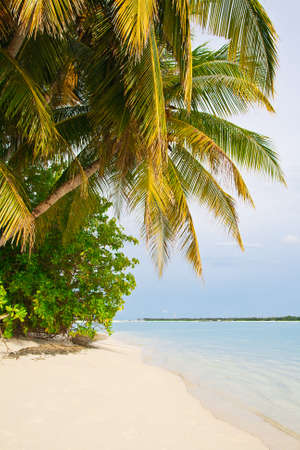 Amazing tropical beach with palms Stock Photo