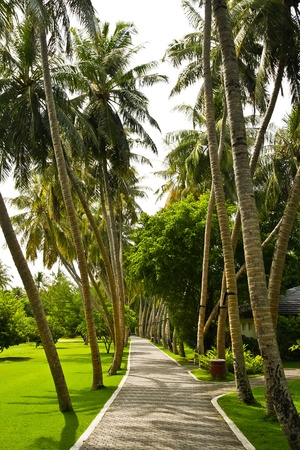 Road through tropical island resort